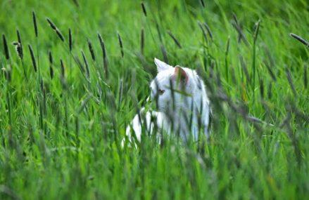 Łąka kwietna zamiast trawnika przy PCE